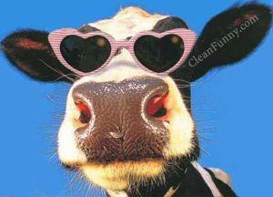 cowglasses