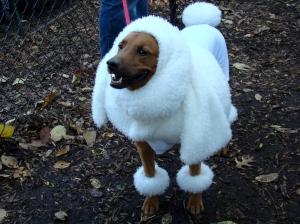 dogwearingpoodle