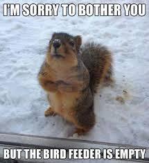 polite squirrelGoog
