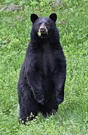 bearhalfstand
