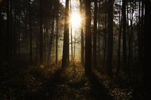 dark_forest_by_sapphira4-d4pa225