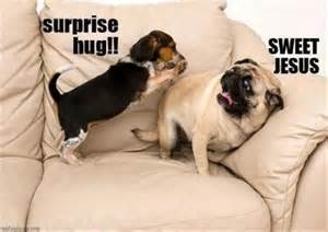 dump-day-funny-dogs-surprise-hugs_34769_thumb