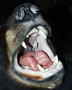 black-bear-50133__180