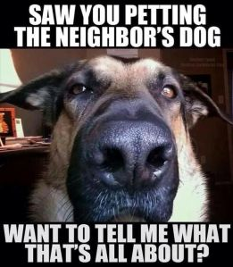 petting the neighbor's dog