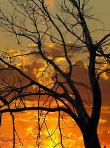tree_sunset_sky