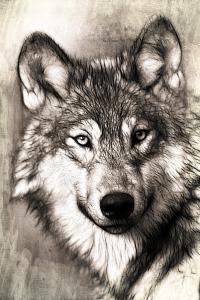 wolf_portrait_pe